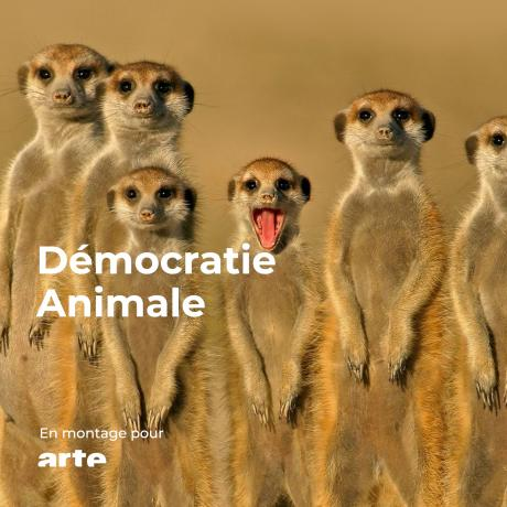 Démocratie animale
